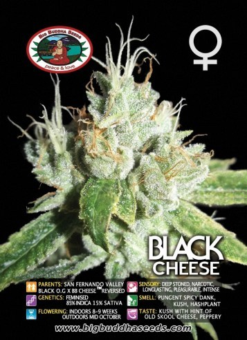 Big Buddha Seeds - Black Cheese NEW
