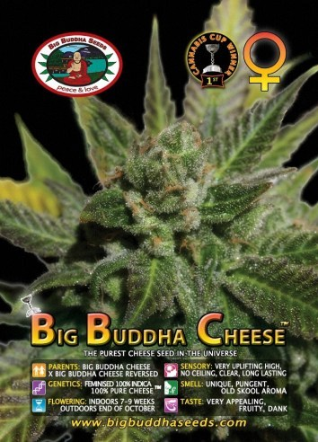 Big Buddha Seeds - Cheese