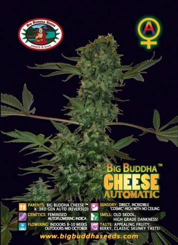 Big Buddha Seeds - Cheese AUTO