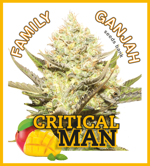 Family Ganjah - Critical Man