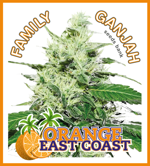 Family Ganjah - Orange East Coast