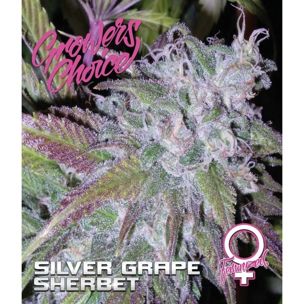 Growers Choice - Silver Grape Sherbert