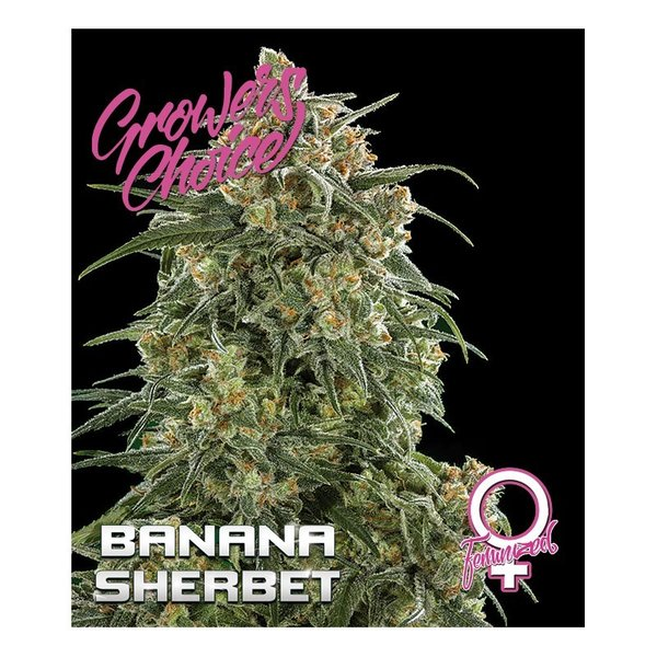 Growers Choice - Banana Sherbet