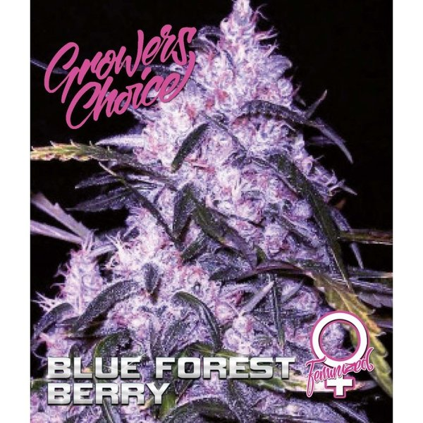 Growers Choice - Blue Forest Berry
